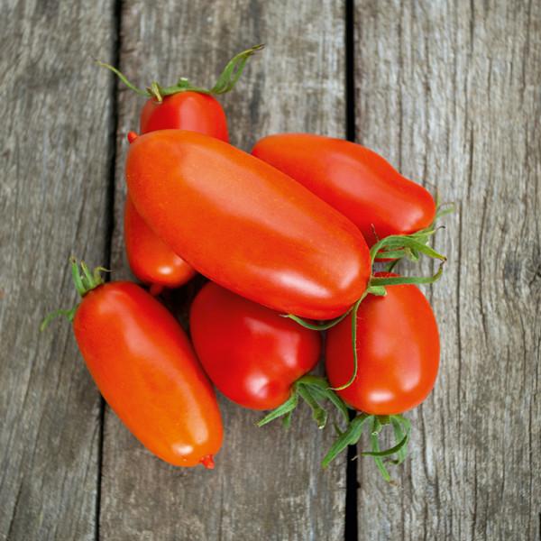 datterino-tomate3NCbViBuDGbVA
